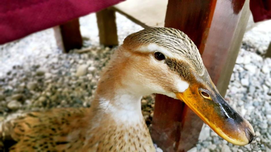 kemer doğal güzellikler ulupınar restaurant yarıkpınar meydan restaurant tekirova (3)