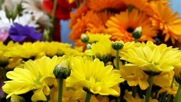 Antalya Işıklar Çiçekçi - 0538 9692901 Gülşen Çiçek Evi (15)