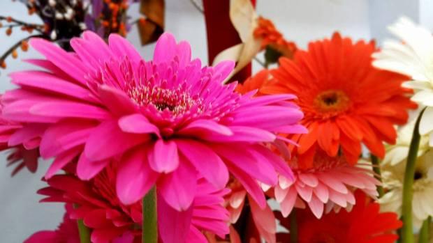 Antalya Işıklar Çiçekçi - 0538 9692901 Gülşen Çiçek Evi (17)