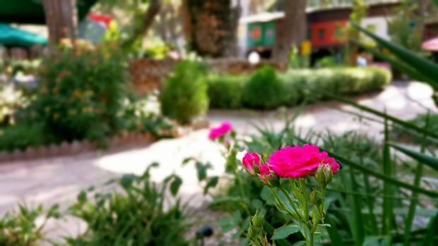 Paşa Kır Bahçesi Çakirlar - 0242 4394747 - Antalya Van Kahvaltısı Çakırlar Kahvaltı Yerleri (1)