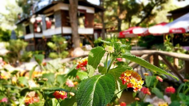 Antalya Köy Kahvaltısı - 0242 4394747 - Çakırlar Gzöleme Bazlama Paşa Kır Bahçesi Çakirlar (17)