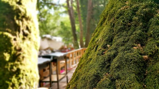 kemer doğal güzellikler ulupınar restaurant yarıkpınar meydan restaurant tekirova (43)